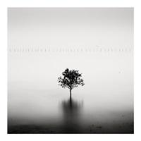 mangrove tree, gulf of tonkin, vietnam by josef hoflehner