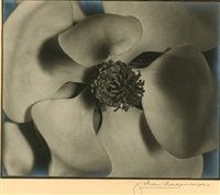 magnolia, california by johan hagemeyer