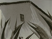 ventana a los magueyes / window on the agaves by manuel alvarez bravo