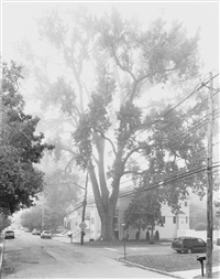 eastern cottonwood tree, staten island ii by mitch epstein