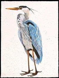 great blue heron, facing left by scott kelley