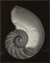 shell by edward weston