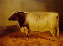 Frank Babbage, Princess Josephine 2nd, a champion cow, at Smithfield and Birmingham