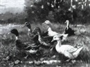 Giovanni Sanvitale, DUCKS