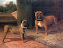 Thomas Percy Earl, Bull dogs