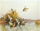 Reveau Mott Bassett, Trepid Lake mallards
