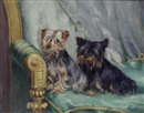 Evelyn Lock, Two Yorkshire terriers seated on a green chair