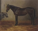 "Ethel L. Tanner, ""Kitty"", a bay horse in a stable"