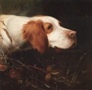 Thomas William Earl, An English setter