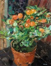 Jack Millar, Solanum winter cherry