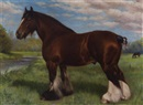 "Frank Babbage, ""Bearwardcote Blaze"", a prize-winning shire horse"
