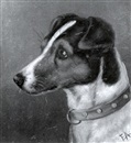 Edward Aistrop, Head of a Smooth Fox Terrier (+ Head of a Wirehaired Fox Terrier; 2 works)