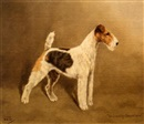 "L.W. Lucas, ""Ch. Crackley Sensational,"" a Wirehaired Fox Terrier"