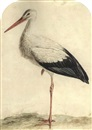 Jan Christiaan Sepp, A stork