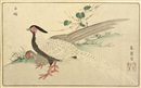 Kitao Masayoshi, A couple of silver pheasants (+ 6 others; 7 works, oban from Kaihaku raikin zui)
