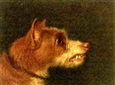 Attributed To Martin Theodore Ward, Snarling terrier (+ another, similar; pair)