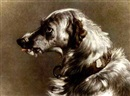James Currie, The head of a deerhound