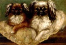 Agnes Field, Two pekingese