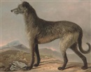 "Scottish School (18), ""Hero"", a Scottish deerhound in a landscape"