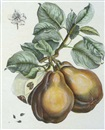 Henri Louis Duhamel du Monceau, Fruit studies (4 works)