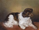 Ferdinand Mallitsch, A liver and white spaniel