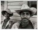 David Stephenson, Sugar cane farmers
