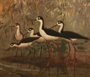 Karl T. Plath, Black-necked stilts