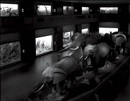 Matthew Pillsbury, Escaping elephants, museum of natural history, nyc