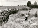 Mikhail Trachman, German war prisoners walking past harvesting peasants