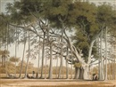 John Gantz, A banian tree in Mr Sultan Shamier's garden at Marmalong