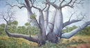 Colin Atkins, Boab trees