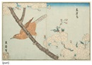 Kitao Masayoshi, Pictures of imported birds (from Raiken zui, oban yoko-e; 5 works)