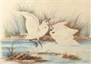 Neville William Cayley, Herons (+ 3 others; 4 works)