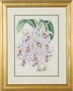 Walter Hood Fitch, Orchids (6 works)