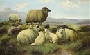 John Shirley Fox, Sheep in the highlands