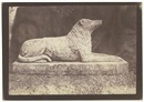 William Henry Fox Talbot, Sir Walter Scott's favorite dog, Maida (from Sun pictures in Scotland)
