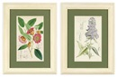 William Curtis, Botanical lithographs (set of 12)