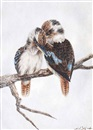 Neville William Cayley, Two kookaburras