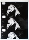 Gerard Malanga and Andy Warhol, Nico