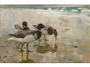 Charles Walter Simpson, Ducks and gulls
