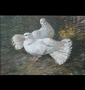 Archibald Russell Watson Allan, Two white doves on the ground amongst foliage (study)