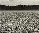 Spencer Tunick, Maine
