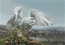 Rod Frederick, White owl about to take flight