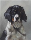 Thomas William Earl, Portrait of a spaniel