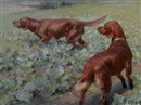 Septimus E. Scott, A pair of Irish Setters in a field