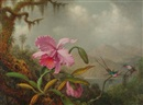 Martin Johnson Heade, Orchids and hummingbirds