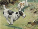 Septimus E. Scott, Fox terriers chasing a rabbit (+ The red spotted handkerchief; 2 works)
