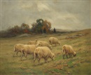 John Wiggins, Sheep grazing