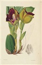 After Walter Hood Fitch, A Second Century of Orchidaceous Plants (bk by James Bateman w/100 works)