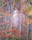 Christopher Burkett, Glowing Autumn Forest, Virginia